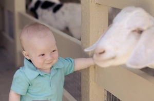 Went to the petting zoo in San Juan Capistrano while cousin Brayden was visiting from Arizona