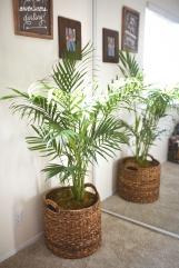 bedroom plant 2