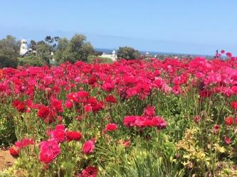 carlsbad flowers 2